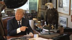 Donald Trump Got Attacked By An Eagle | Gif Finder – Find and Share funny…