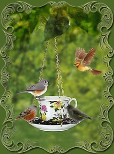 Discover & share this Nature GIF with everyone you know. GIPHY is how you search, share, discover, and create GIFs. Animiertes Gif, Animated Gif, Beautiful Gif, Beautiful Birds, Pretty Birds, Love Birds, Gif Pictures, Pretty Pictures, Gifs