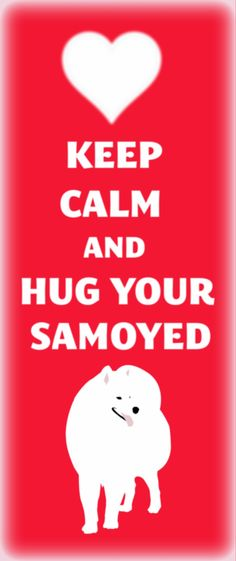 hug your samoyed!!