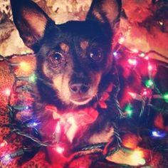 My dog Lola