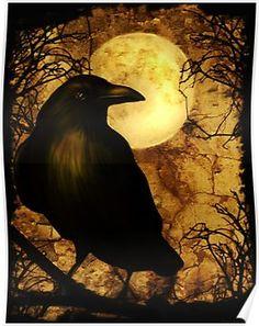 Crow Art, Bird Art, Raven Pictures, Bird Pictures, Crow Images, Halloween Raven, Raven Bird, Crow Or Raven, Domino Art