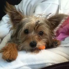 My puppy loves carrots, I love Hobbes