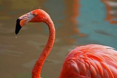 Flaming Flamingo Photo by Michiale Schneider -- National Geographic Your Shot