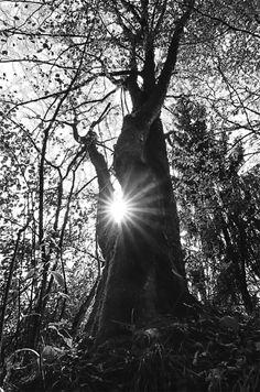 black & white by cesarecalzavara on 500px