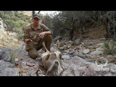 Rinella's version is clean & professional: How to Gut a Deer with Steven Rinella - MeatEater - YouTube