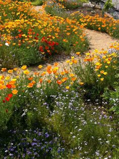 """🇬🇧 Plant of the Day: """"Eschscholzia californica,"""" California poppies form a river of colour in the Theodore Payne Garden (Moulton College, Northampton, England) by Jill Raggett cr. Flowers Nature, Pretty Flowers, Red Flowers, Nature Aesthetic, Flower Aesthetic, Portland, Meadow Garden, California Poppy, No Rain"""