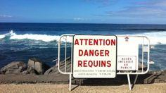 Un risque pour vous, c'est quoi ? 1ère question du QUESTIONNAIRE au cœur d'Enquête En Quête #2 http://www.enquetebdx.fr #enquetebdx #sharkporn