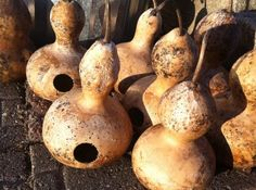 Birdhouse Gourd Design: How To Make A Gourd Birdhouse With Kids