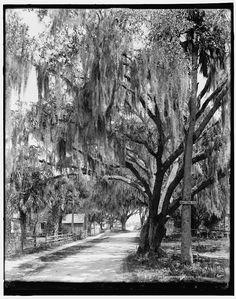 The Corner of Daytona Street and Bay Street, Daytona, Fla., 1900-1906, William Henry Jackson, photographer; Detroit Publishing Co.; Library of Congress  Prints and  Photographs Division Washington, D.C