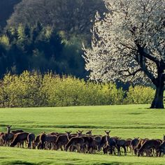 Get field of deer photos and images from Picfair. Find high-quality stock photos that you won't find anywhere else. Display Advertising, Print Advertising, Deer Photos, Retail Merchandising, Us Images, Royalty Free Images, Wall Art Prints, Wildlife, Stock Photos