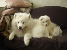 How to Introduce a New Dog to Your Dog - How I Met My Brother