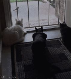 Cats are simply the best pets, they make us laugh all the time! Try not to laugh if you can! Just look how all these cats & kittens play, fail, get along with Funny Animal Pictures, Cute Funny Animals, Funny Cute, Funny Dogs, Cute Cats, Super Funny, Awkward Animals, Pretty Animals, Animal Pics