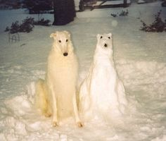 Russian Wolfhound. I love it! :D but I think I would prefer the Irish Wolfhound :) Dog Pictures, Funny Pictures, Pet Photos, Hilarious Photos, Funny Images, Bing Images, Funny Animals, Cute Animals, Funny Dogs