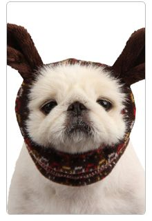 #Pet Products for #Winter Weather: Puppia Winter Snood