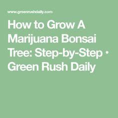 How to Grow A Marijuana Bonsai Tree: Step-by-Step • Green Rush Daily