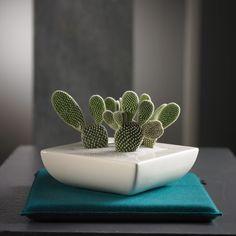 TIZIANO Schale Kaktus