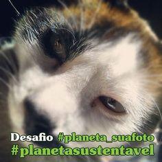 Fotografe um bicho e participe do desafio do Planeta Sustentável no Instagram: http://abr.io/4ixl