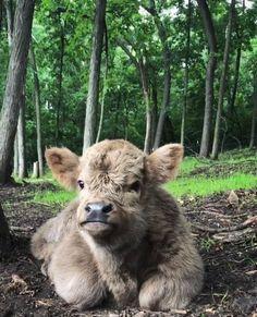 Curled Animal Feetsies Of All Kinds. Baby Farm Animals, Baby Cows, Baby Animals Pictures, Happy Animals, Cute Animal Pictures, Super Cute Animals, Cute Little Animals, Cute Funny Animals, Cute Baby Cow