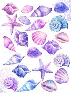 Starfish Drawing, Seashell Painting, Seashell Art, Watercolor Ocean, Watercolor Wallpaper, Wallpaper Pink And Blue, Sea Shells, Conch Shells, Seashell Tattoos