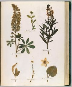 Emily Dickinson's Herbarium: A Forgotten Treasure at the Intersection of Science and Poetry – Brain Pickings