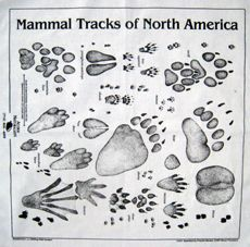 one of my favorite nature study tools evah!! It's a scarf with animal tracks! Keep it in your pocket or bag until you see tracks and then spread it on the ground next to the tracks to identify. #homeschool #science
