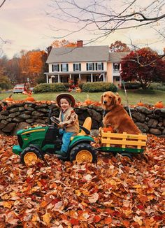 Cute Puppies, Cute Dogs, Autumn Scenery, Classy Girl, Autumn Aesthetic, Retriever Puppy, Fall Pictures, Funny Dogs, Autumn Leaves