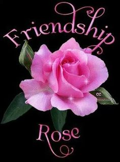 From My shoulder sweet understanding friend Patricia ! Thank you sdo much !!!!!! Friendship Rose