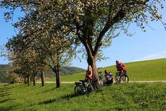 An sonnigen Tagen im Frühsommer ist eine Radtour genau das Richtige! #naturparkalmenland #almenland #radfahren Foto (c) Kreiner Dolores Park, Travel, Biking, Summer, Voyage, Viajes, Traveling, Trips, Tourism