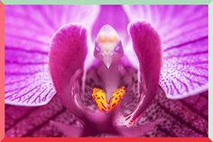 14 peculiares flores que parecem ser outra coisa!