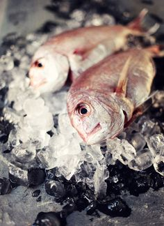 What Katie Ate » Fish/Seafood
