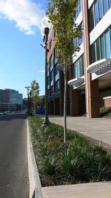 Riverside Biomedical Campus : Hill Studio