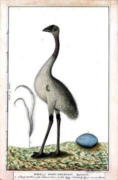 Australia- Emu and Egg