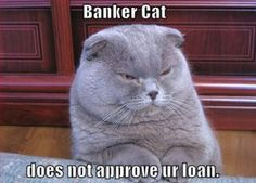 Banker Cat – He will deny your loan