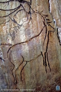 Magdalenian Era Cave Painting of Stag -- Grotte de Niaux, France -- Approximately 15,000 years old.