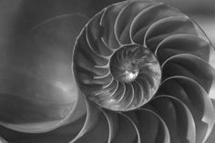 Proximity. All the elements on the photo are evenly spaced. In this photo they are close which shows a close relationship. Elements And Principles, Elements Of Design, Logarithmic Spiral, Pantheism, Religion, Fibonacci Spiral, Spiral Galaxy, Design Movements, Spiral Pattern