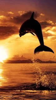 dolphin leap silhouette