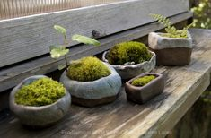 Moss container gardens.