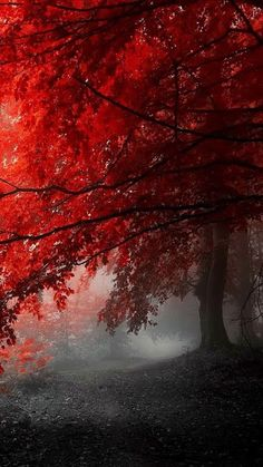 Crimson leaves.