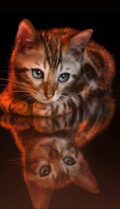 Pretty Cats, Beautiful Cats, Animals Beautiful, Cute Baby Cats, Kittens Cutest, Kittens And Puppies, Cats And Kittens, Baby Animals, Cute Animals