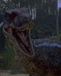 velociraptor jurassic park - Google zoeken