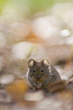 ~Maus im Gegenlicht~