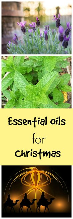 Essential oils for Christmas gifts.
