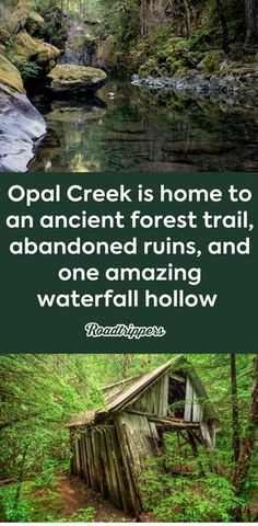 An ancient forest and waterfall oasis await at Oregon's Opal Creek Wilderness.a lush hiker's paradise!