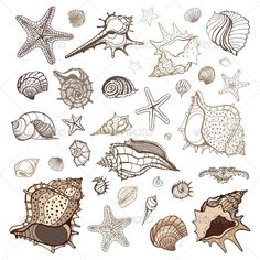 Sea Shells Collection.  #GraphicRiver         Sea shells collection. Handdrawn vector