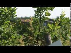 «Сельский порядок» (11.06.2014)