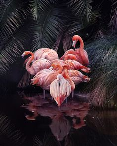 Double-tap to fill the flamingo heart with your love. Waaait a minute. is this just some trick to get a few extra likes? Flamingo Art, Pink Flamingos, Flamingo Pictures, Photos Originales, Surreal Collage, Classic Paintings, Animal Species, Animal Wallpaper, Art Festival
