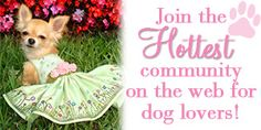 If you love dogs, I hope you will check out this new online community. There are truly some of the cutest dog videos you have ever seen, plus articles and a forum where you can connect with others. See you there! Dirty Dog Lovers