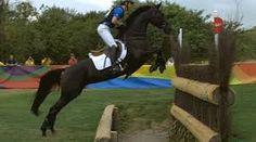 Bildergebnis für horse cross country gifs