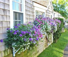 Get inspired with our Container Gardening Ideas for small containers, urns and many more. Create features in your outdoor spaces. Window Box Flowers, Flower Boxes, Container Plants, Container Gardening, Gardening Books, Small Gardens, Outdoor Gardens, Outdoor Spaces, Outdoor Living