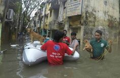 Heroic Rescuers Save Animals From Heavy Floods in Chennai, India (PHOTOS)